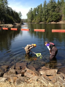 two environmental technician students wearing waders in water with fishing net - Pembroke Campus full-time programs