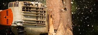 Urban Forestry - Arboriculture, Algonquin College
